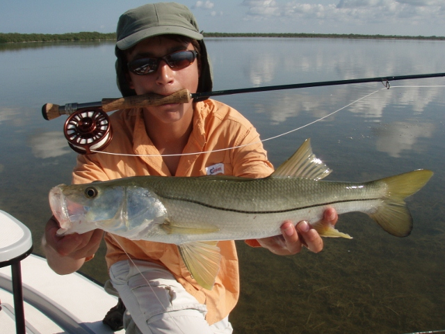 Everglades fly fishing for snook miami fly fishing guide for Snook fishing florida