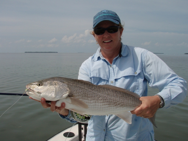Miami fly fishing redfish everglades for Fly fishing redfish